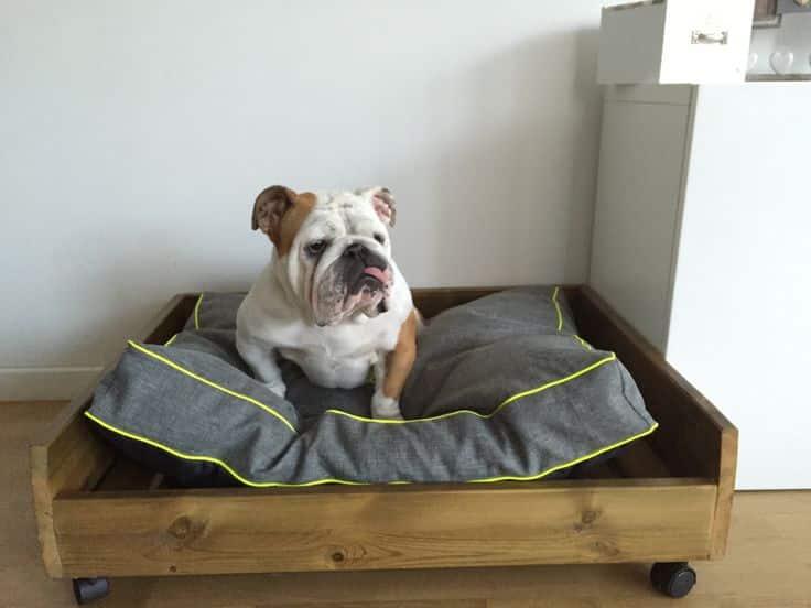 decorer et creer des meubles pour votre chien