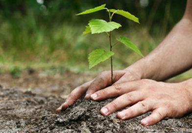 Quels arbres fruitiers planter pour mon jardin ?
