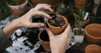 Activité manuelle : quand le jardinage devient un loisir !